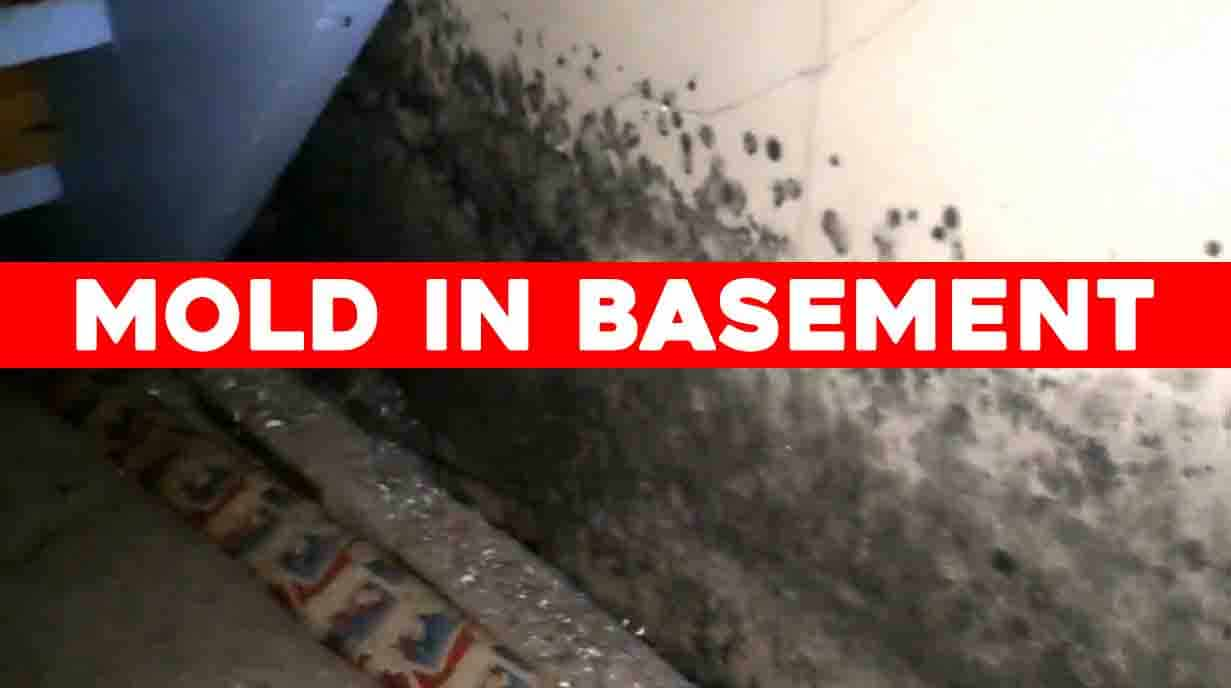 best-air-purifier-that-removes-mold-in-basement